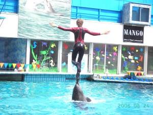 "Дельфинарий в гостинице ""Ялта Интурист"""
